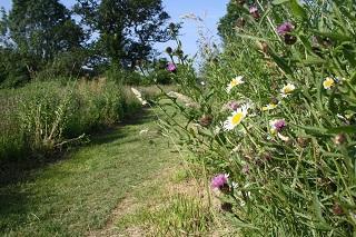 Wildflowers growing in a Devon bank along a pathway.