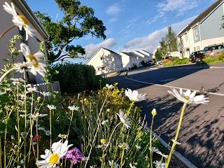 A view of new build houses in Totnes, with flowers growing nearby